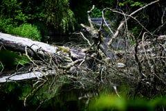 Paisaje del bosque con la charca Fotografía de archivo libre de regalías