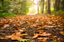 Paisaje del bosque con las hojas en un rastro Fotos de archivo libres de regalías