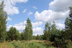 Paisaje del bosque con las nubes Fotos de archivo libres de regalías