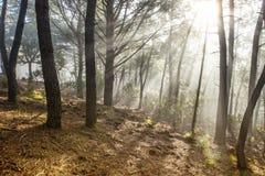 Paisaje del bosque con los rayos de la luz caliente en la salida del sol, Hurdes, España Imagen de archivo