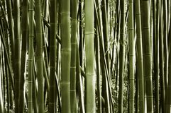 Paisaje del bosque de bambú Fotos de archivo libres de regalías