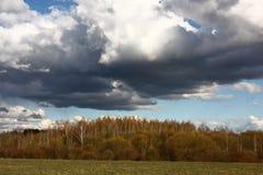 Paisaje del bosque de hojas caducas de la primavera Fotografía de archivo libre de regalías