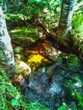 Paisaje del bosque de la acuarela Poca cala, llave de la primavera libre illustration