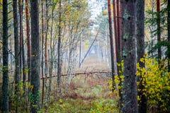 Paisaje del bosque de la caída Fotos de archivo