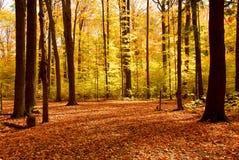 Paisaje del bosque de la caída Foto de archivo
