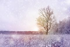 Paisaje del bosque de la estación del invierno Imagenes de archivo
