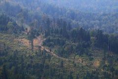 Paisaje del bosque de la montaña Foto de archivo libre de regalías