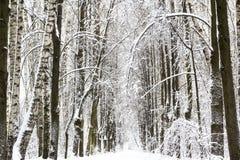 Paisaje del bosque de la nieve del invierno Foto de archivo libre de regalías