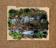 Paisaje del bosque de la plantación de piñas, a través de agujas del pino en el pío de tierra Imagen de archivo