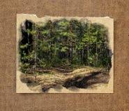 Paisaje del bosque de la plantación de piñas, a través de agujas del pino en el pío de tierra Foto de archivo
