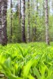 Paisaje del bosque de la primavera Fotos de archivo libres de regalías