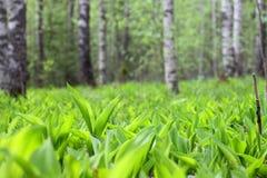 Paisaje del bosque de la primavera Fotografía de archivo libre de regalías