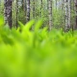 Paisaje del bosque de la primavera Imágenes de archivo libres de regalías