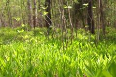 Paisaje del bosque de la primavera Fotografía de archivo