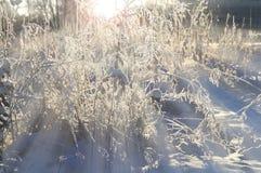 Paisaje del bosque de la puesta del sol del invierno - naturaleza del invierno bajo luz de la puesta del sol Imagen de archivo