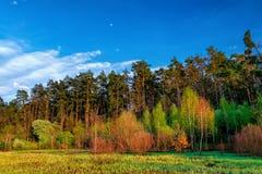 Paisaje del bosque debajo del cielo de la tarde con las nubes en luz del sol Imagen de archivo libre de regalías