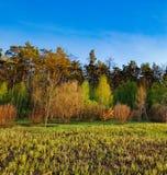 Paisaje del bosque debajo del cielo de la tarde con las nubes en luz del sol Fotos de archivo
