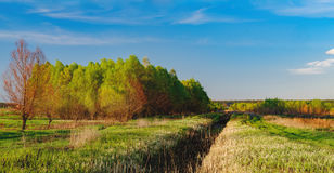 Paisaje del bosque debajo del cielo de la tarde con las nubes en luz del sol Fotografía de archivo libre de regalías