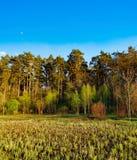 Paisaje del bosque debajo del cielo de la tarde con las nubes en luz del sol Imagenes de archivo