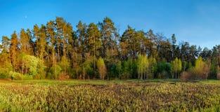 Paisaje del bosque debajo del cielo de la tarde con las nubes en luz del sol Fotografía de archivo