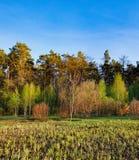 Paisaje del bosque debajo del cielo de la tarde con las nubes en luz del sol Foto de archivo libre de regalías
