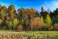 Paisaje del bosque debajo del cielo de la tarde con las nubes en luz del sol Fotos de archivo libres de regalías