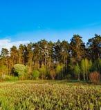 Paisaje del bosque debajo del cielo de la tarde con las nubes en luz del sol Foto de archivo