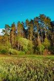 Paisaje del bosque debajo del cielo de la tarde con las nubes en luz del sol Imágenes de archivo libres de regalías