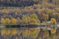 Paisaje del bosque del abedul en otoño Foto de archivo libre de regalías