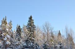 Paisaje del bosque del invierno imagen de archivo