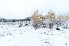 Paisaje del bosque del invierno Imagen de archivo libre de regalías