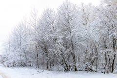 Paisaje del bosque del invierno Foto de archivo libre de regalías