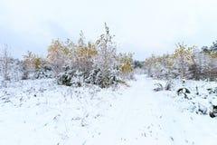 Paisaje del bosque del invierno Fotos de archivo