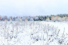 Paisaje del bosque del invierno Fotografía de archivo libre de regalías