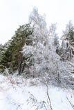 Paisaje del bosque del invierno Fotos de archivo libres de regalías