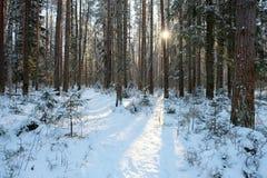 Paisaje del bosque del invierno Foto de archivo