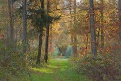 Paisaje del bosque del otoño con camino en el centro foto de archivo