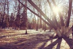 Paisaje del bosque del sol de la primavera Fotos de archivo libres de regalías