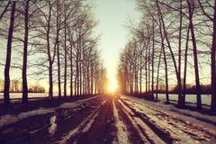 Paisaje del bosque del sol de la primavera Foto de archivo libre de regalías