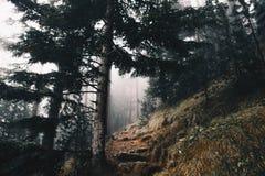Paisaje del bosque en el invierno con un fondo de niebla del ambiente imagenes de archivo