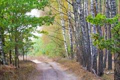 Paisaje del bosque en el otoño temprano Imágenes de archivo libres de regalías