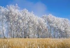 Paisaje del bosque en el otoño temprano Fotografía de archivo