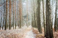 Paisaje del bosque en el otoño temprano Foto de archivo