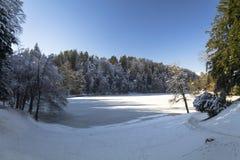 Paisaje del bosque en invierno Imagen de archivo