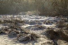 Paisaje del bosque en invierno Fotografía de archivo libre de regalías