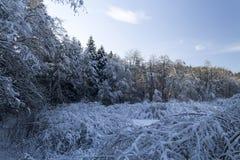 Paisaje del bosque en invierno Imágenes de archivo libres de regalías
