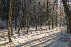 Paisaje del bosque en invierno Fotografía de archivo