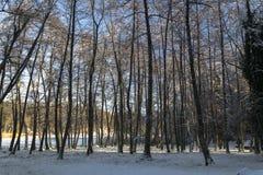 Paisaje del bosque en invierno Fotos de archivo