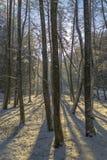 Paisaje del bosque en invierno Imagenes de archivo