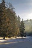 Paisaje del bosque en invierno Imagen de archivo libre de regalías